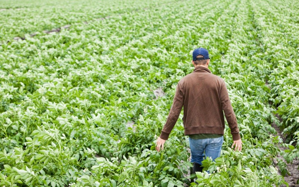 usda growing agricultural trade in vietnam scarbrough international
